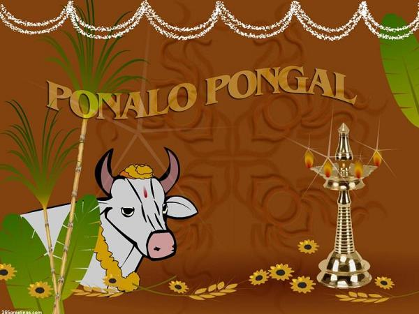 Pongal wishes messages and pongal greetings 365greetings happy pongal wishes m4hsunfo